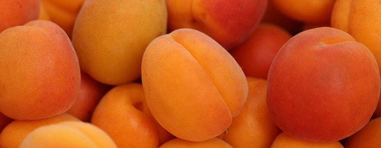 Are apricots healthy