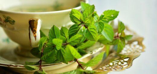 Benefit of mint tea