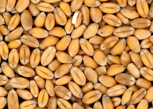 What is whole grain