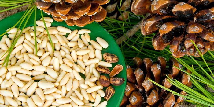 How to store pine nuts