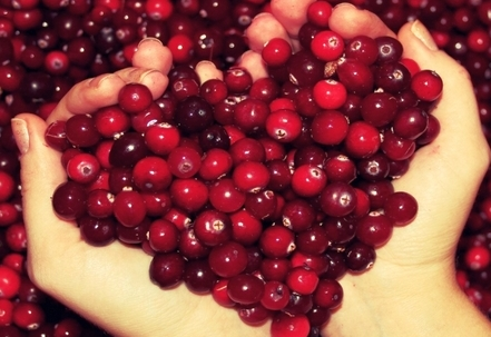 How to store lingonberries