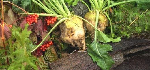 8 Benefits of Sugar Beet You Haven't Heard of