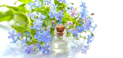 Blue Anemone Oil Benefits, Usage