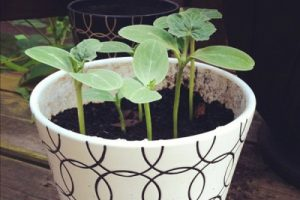 Planting the Seeds in the Pot