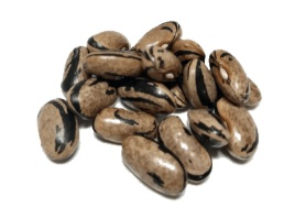 Lapwing bean