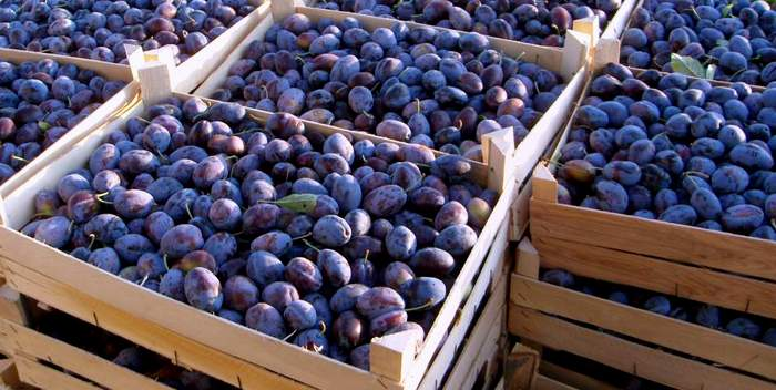 How to store plums