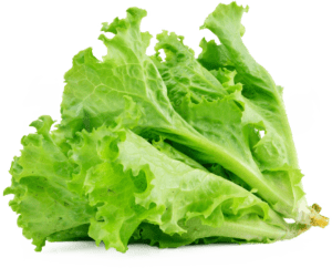 Which Herbs For Endive