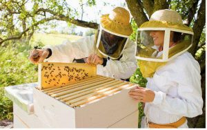 how honey is collected