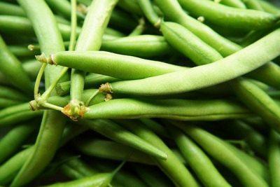 Benefits of Fresh Beans