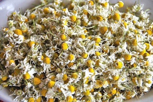 How to Dry Chamomile