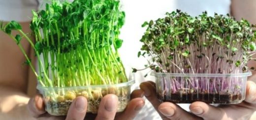 What is Micro Sprout