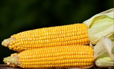 What is Corn