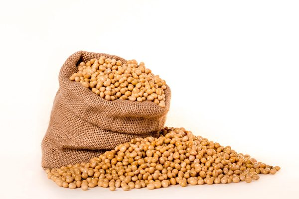 What is Soybean
