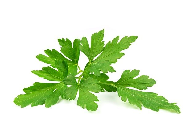 Nutritional Value of Parsley