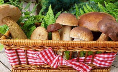 Pine Mushroom