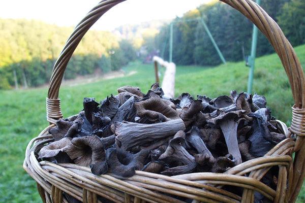 Trumpet Mushroom