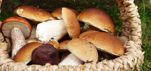 Bear Mushroom
