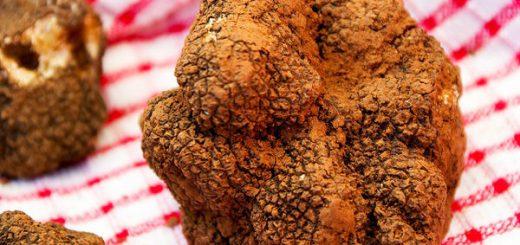 Truffles Mushrooms