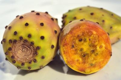 Benefits of Cactus Fruit