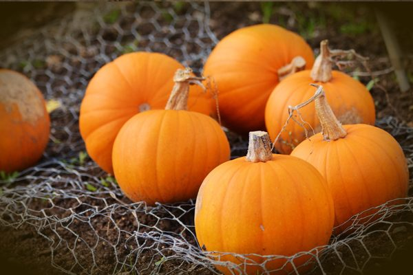 Pumpkin Benefits, Calories and Nutritional Value